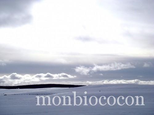 Plateau Aubrac