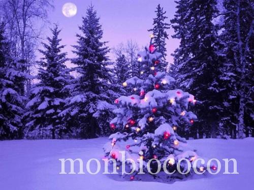 noel-sous-la-neige
