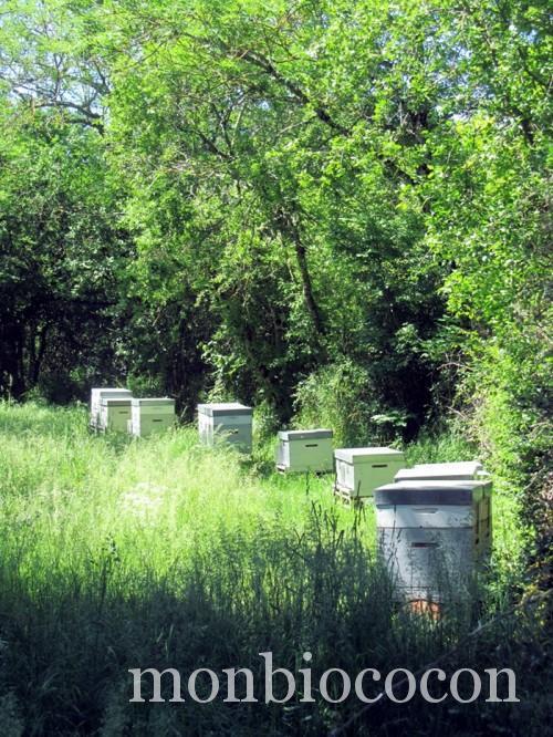 ruches-abeilles