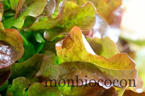 COM3POM-panier-bio-livraison-légumes-bordeaux-agen-toulouse-7