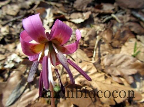 fleur des sous bois