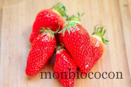 fraises-gariguettes-2012-9