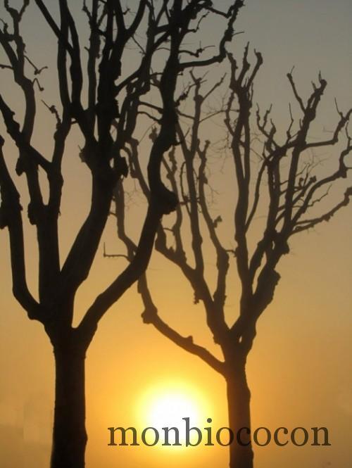 soleil-levant-entre-les-arbres