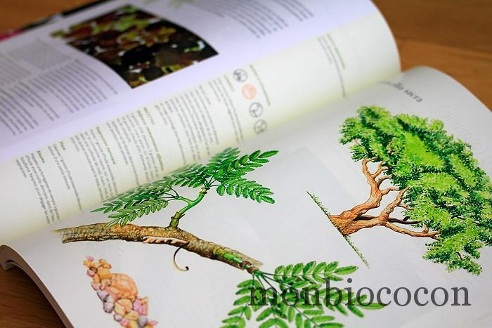 aromatherapia-livre-isabelle-pacchioni-6