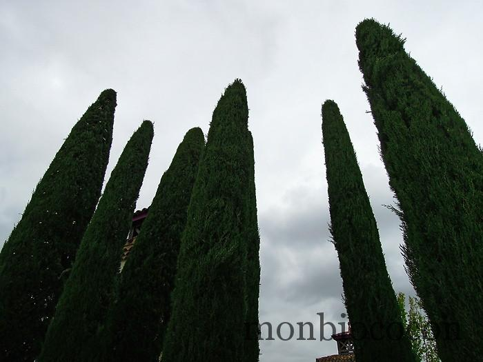 chateau-smith-haut-lafitte-gironde-vignoble-7