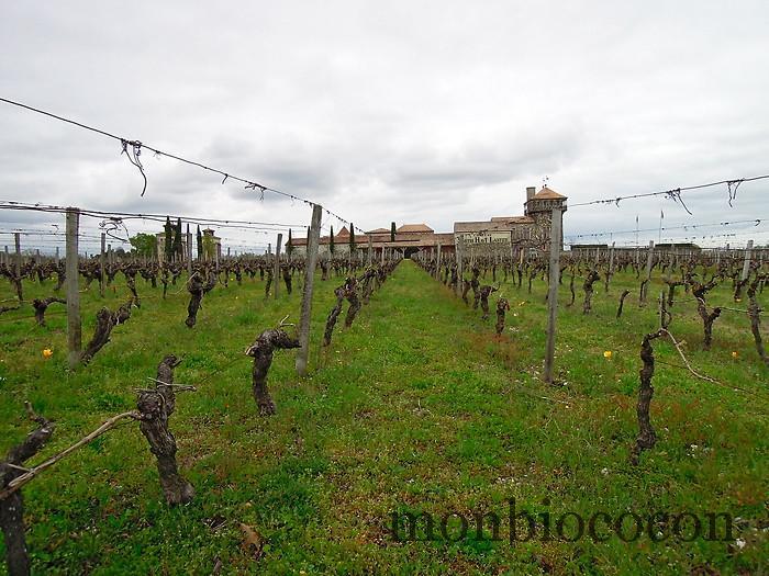 chateau-smith-haut-lafitte-gironde-vignoble