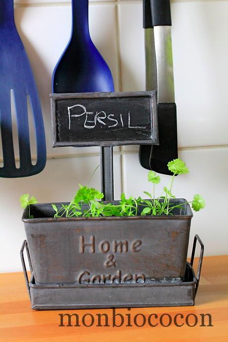 je jardine dans ma cuisine le persil plat et a pousse encore et encore mon bio cocon. Black Bedroom Furniture Sets. Home Design Ideas