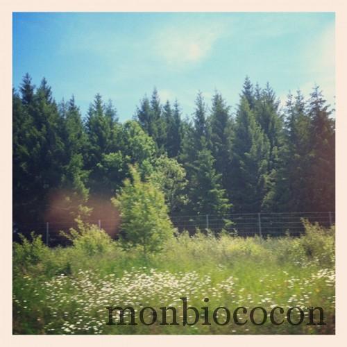 bois-foret-alpes-tourisme-rando
