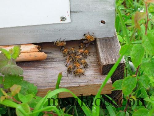 un-toit-pour-les-abeilles-8