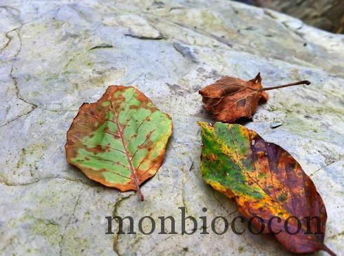 feuilles-automne-pyrénées