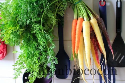 carotte-blanche-jaune-orange-violette
