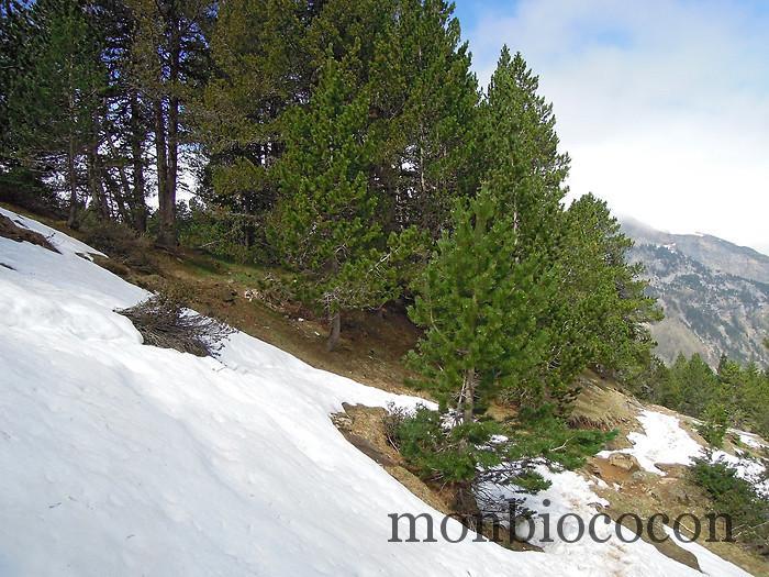 neige-cirque-gavarnie-randonnée-pyrénées