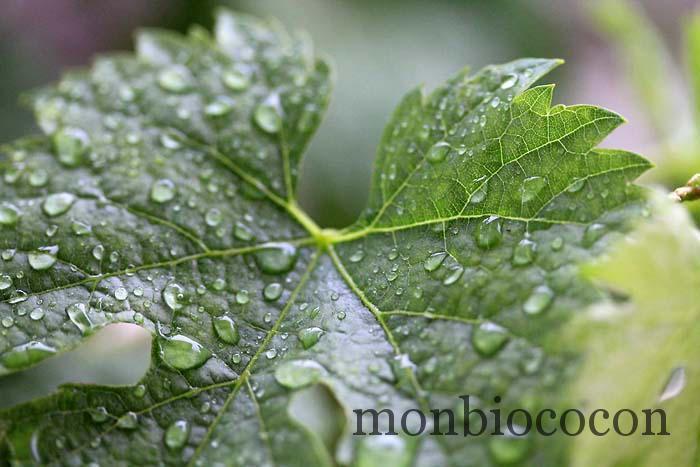 figue de vigne caudalie eau fraiche-5