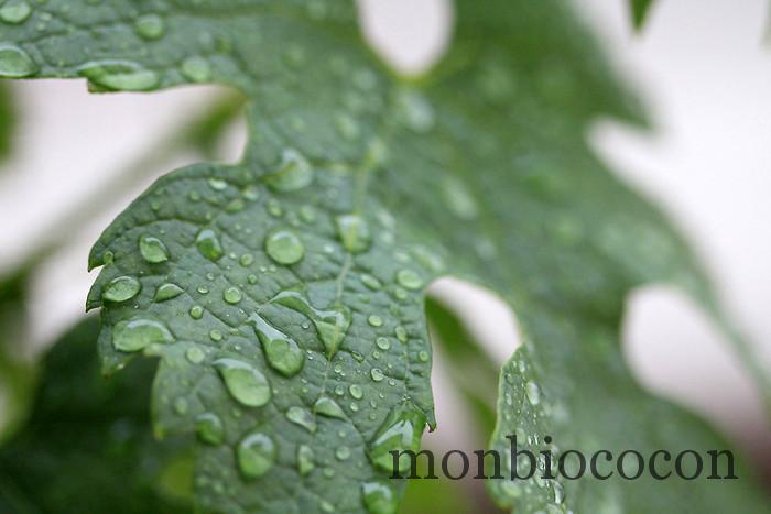 figue de vigne caudalie eau fraiche-6