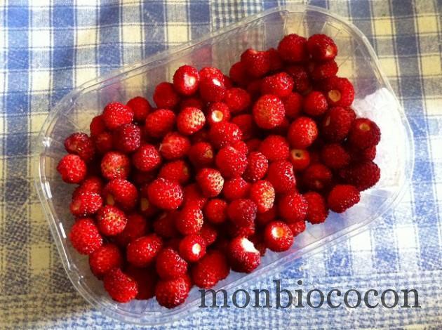 fraises-des-bois-du-jardin