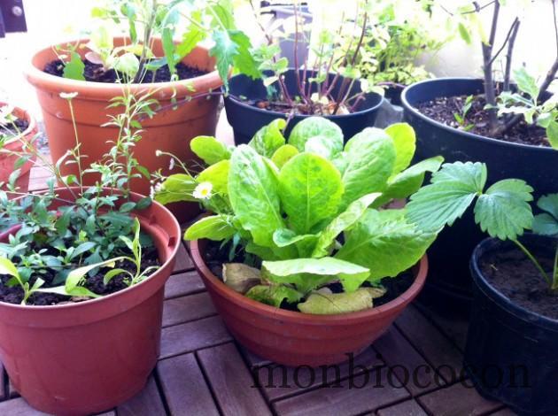 jardin-sur-balcon-en-ville