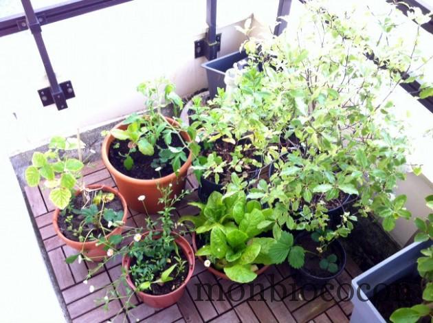 jardin-sur-balcon-en-ville-bordeaux