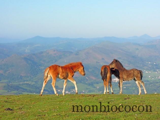 tourisme-randonnee-pays-basque-mondarrain-7