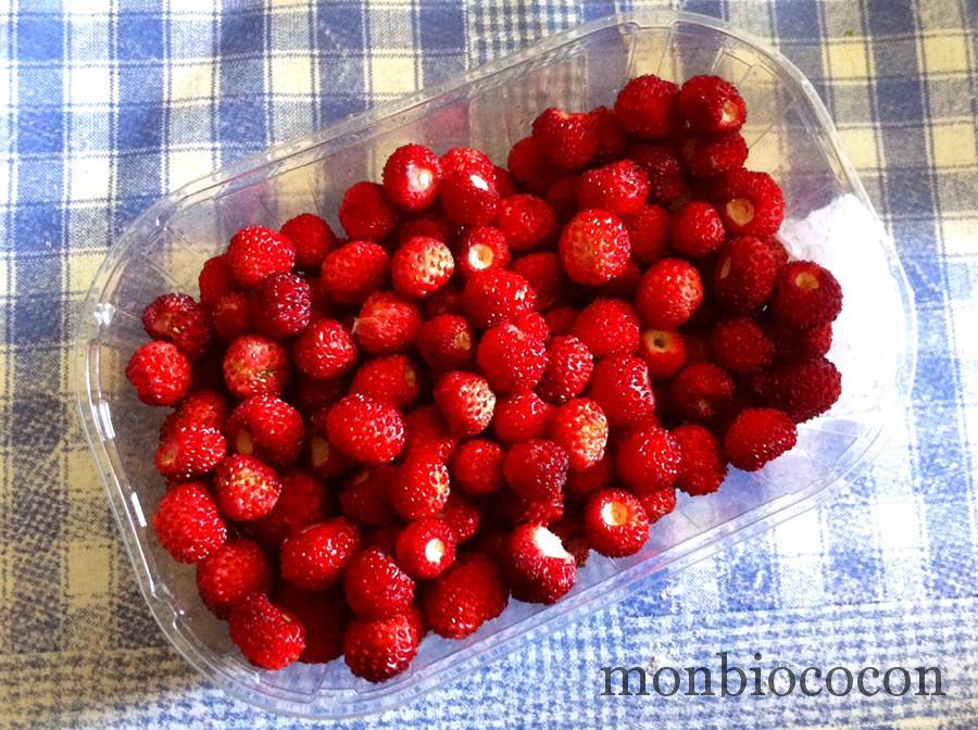 fraises-des-bois-campagne-france