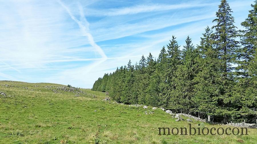 photo-randonnee-plateau-aubrac-aveyron-lozere-0