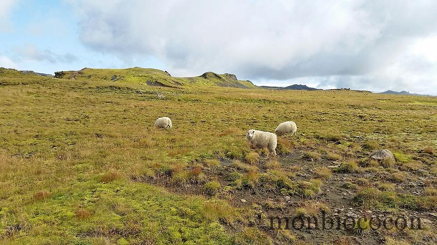 islande-ete-2014-12