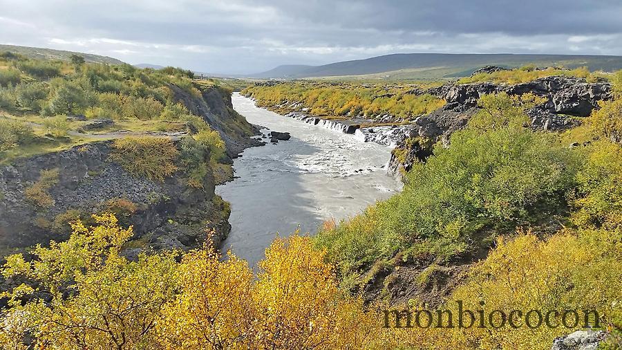 Pourquoi En Islande Les Moutons Sont Toujours Par