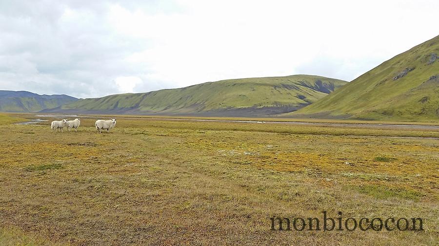 roadtrip-islande-photos-3