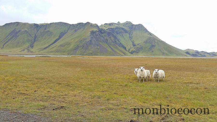 roadtrip-islande-photos