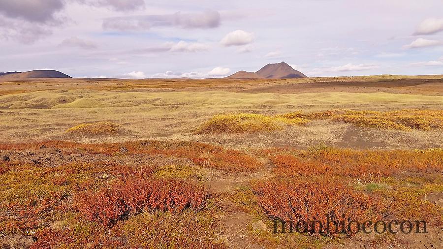 islande-roadtrip-tour-de-ile-12