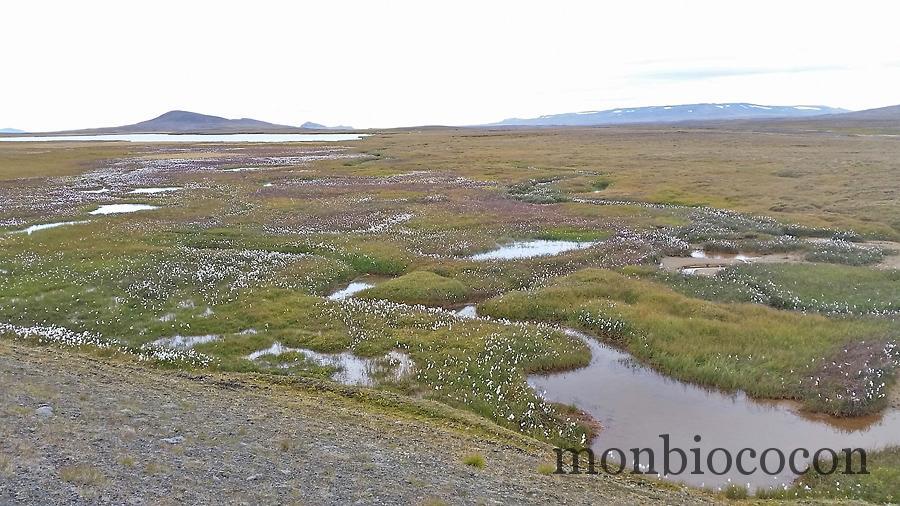 islande-roadtrip-tour-de-ile-6