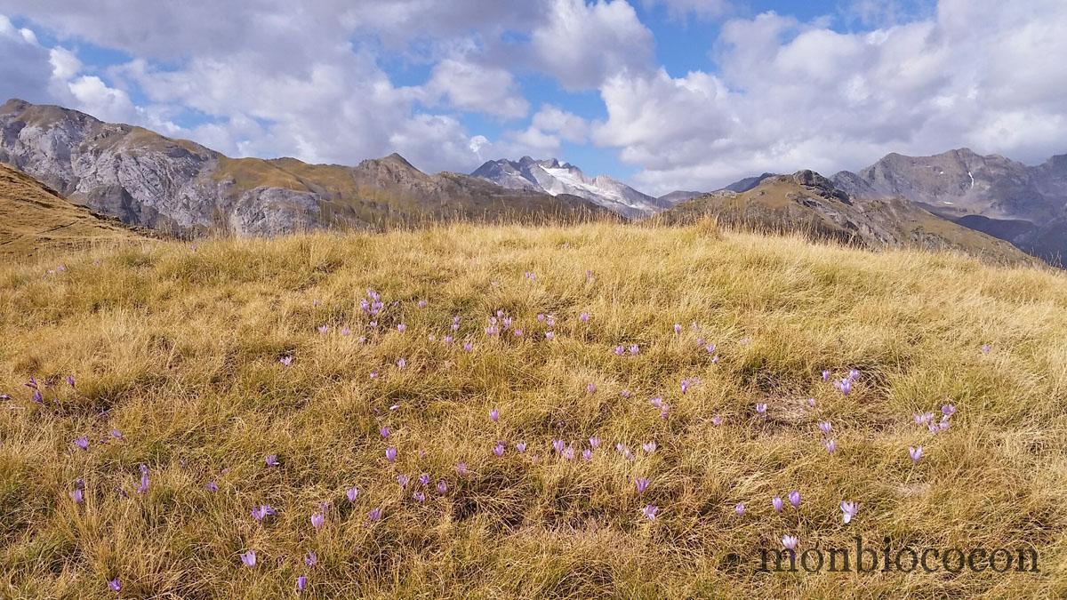 pyrenees-montagnes