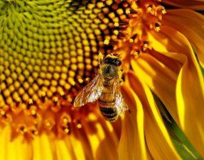 Parrainer une ruche pour sauver mon pot de miel et les abeilles avec