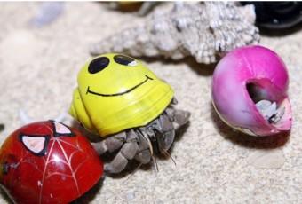 Bernard l'ermite terrestre domestique à coquille colorée: NAC = nouvel animal de compagnie