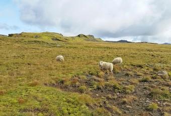 Islande : ces petites choses que tu ignores 2/2