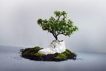 Oat: des baskets 100 % biodégradables à planter au fond du jardin