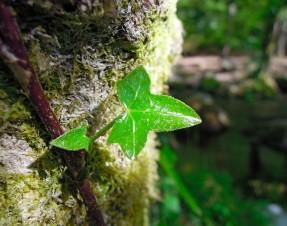 #1 Tourisme en Bretagne : Huelgoat et sa magnifique forêt fluo