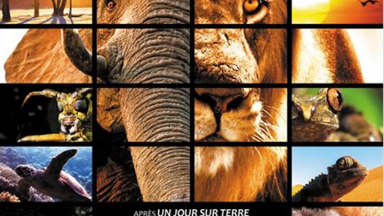 Nature, le film avec des animaux dedans